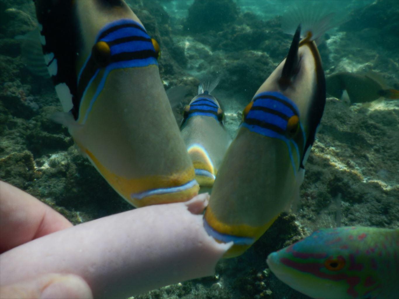 ファイファイビーチ_魚