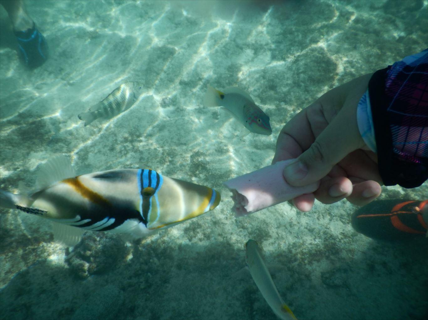 ファイファイビーチ_魚2