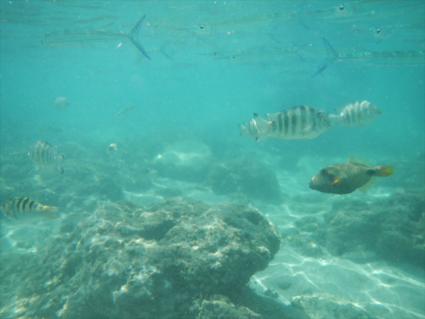 ファイファイビーチ_魚3