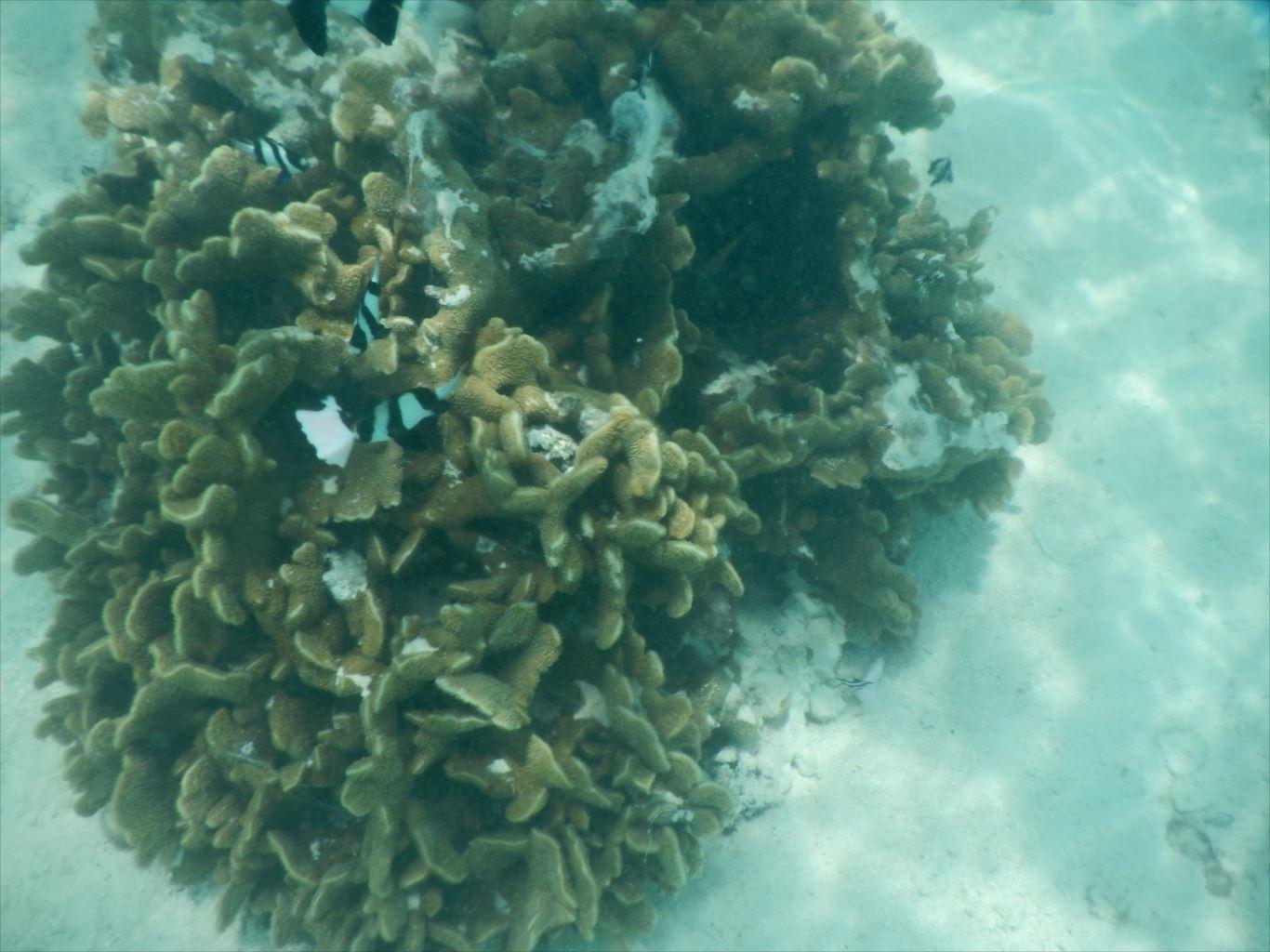 ウェスティン前サンゴ
