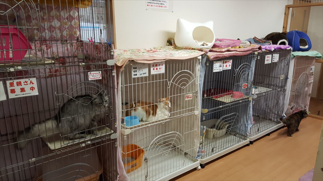世界の猫グッズ博物館_猫部屋1
