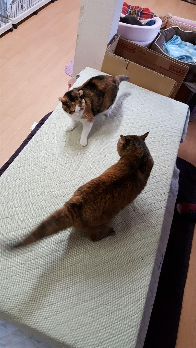 世界の猫グッズ博物館_猫部屋2