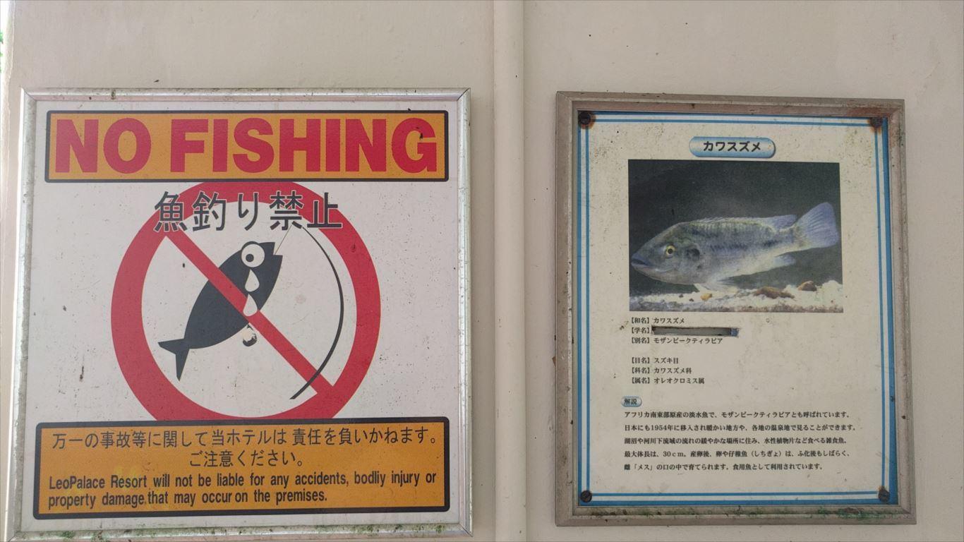 マネンガンレイク_魚の種類