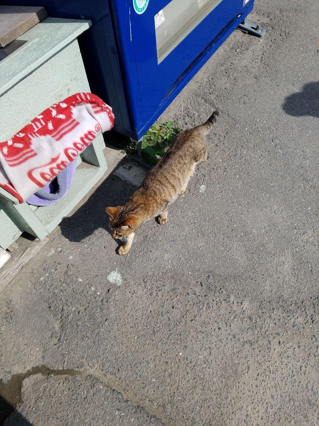 網地島ライン_乗り場の猫
