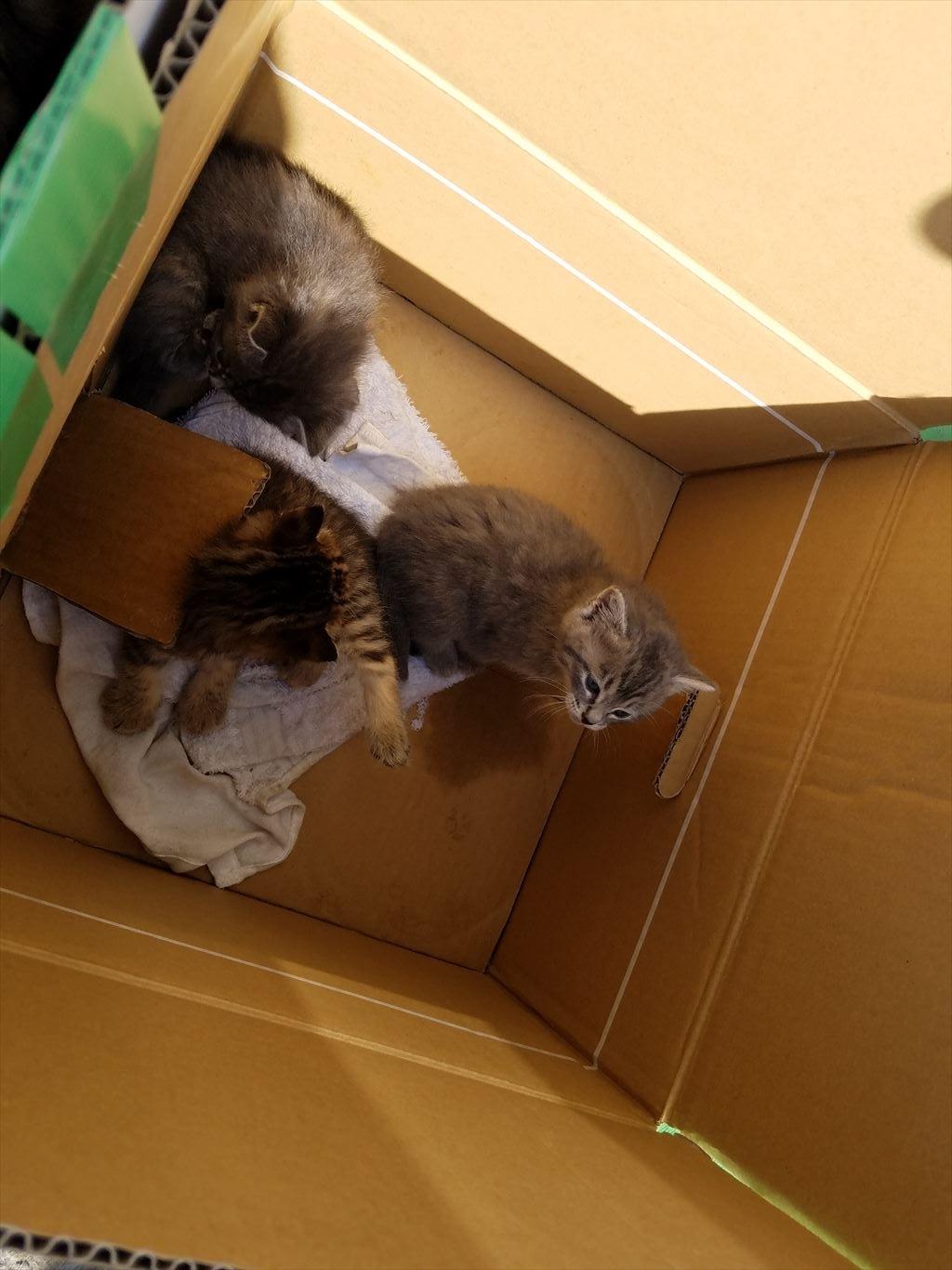 網地島ライン_乗り場の子猫